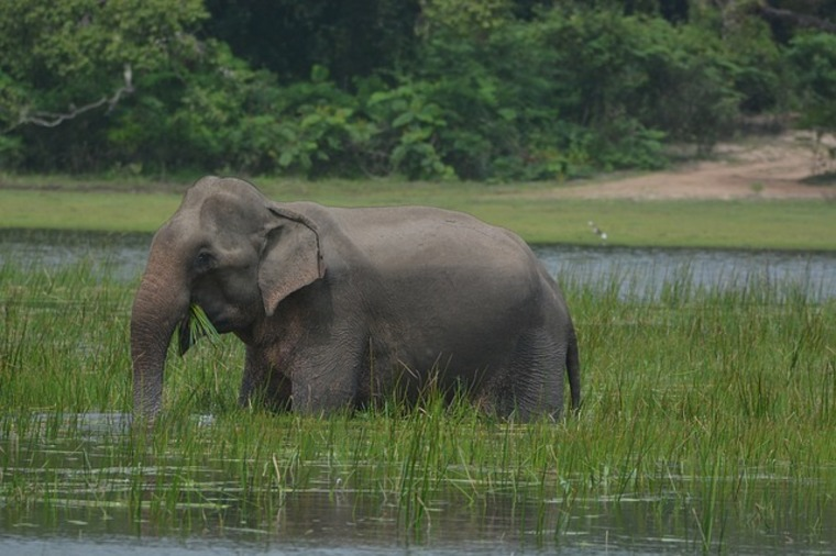 Sri Lanka Visa for Indians